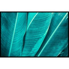Tropical Palm Leaf Plakat