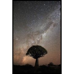 Quiver Tree Milkyway Plakat